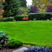 Gardening Services in Belfast